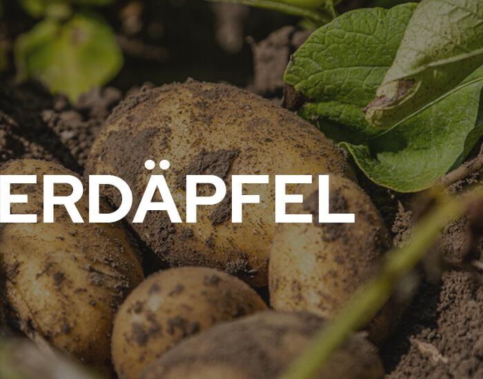 Hofkellerei Lackner Erdäpfel Kartoffel